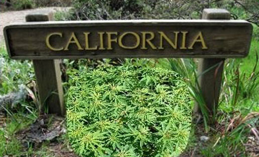 California-marijuana-2